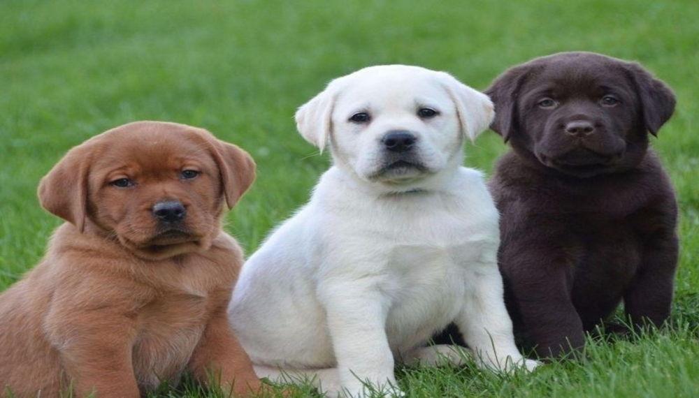 6 ράτσες σκύλων ιδανικές για παιδιά